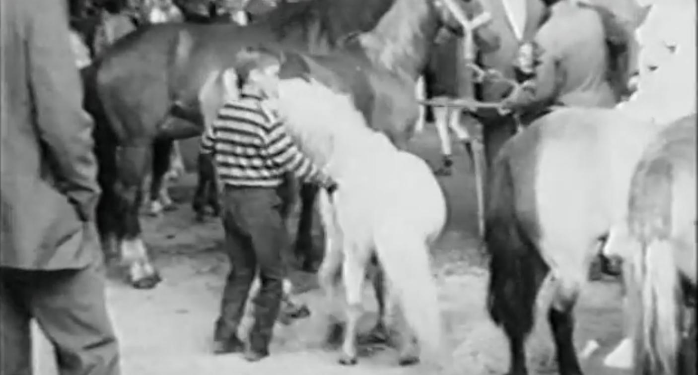 Paardenmarkt 1968